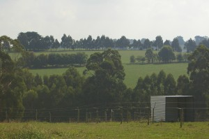 Accommodation for horses in training - well fenced paddocks, all with shelters