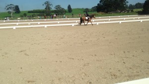 Dressage arenas being used at our Unofficial competitions