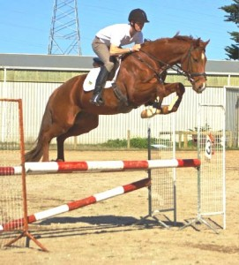 Le Primeur gelding - sold to WA for showjumping